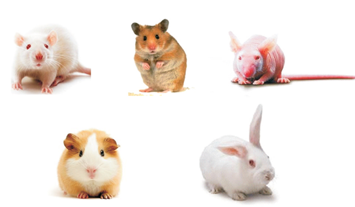 laboratory animals pictures to pin on pinterest thepinsta